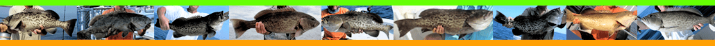 Topsail Fishing Charters - NX Topsail Island Fishing Guide